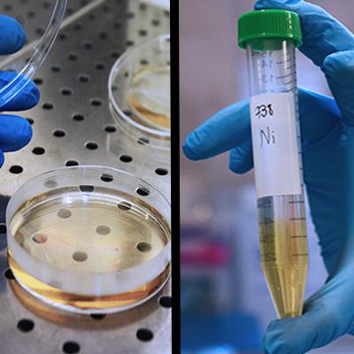 Analisi_acqua_chimica_microbiologica